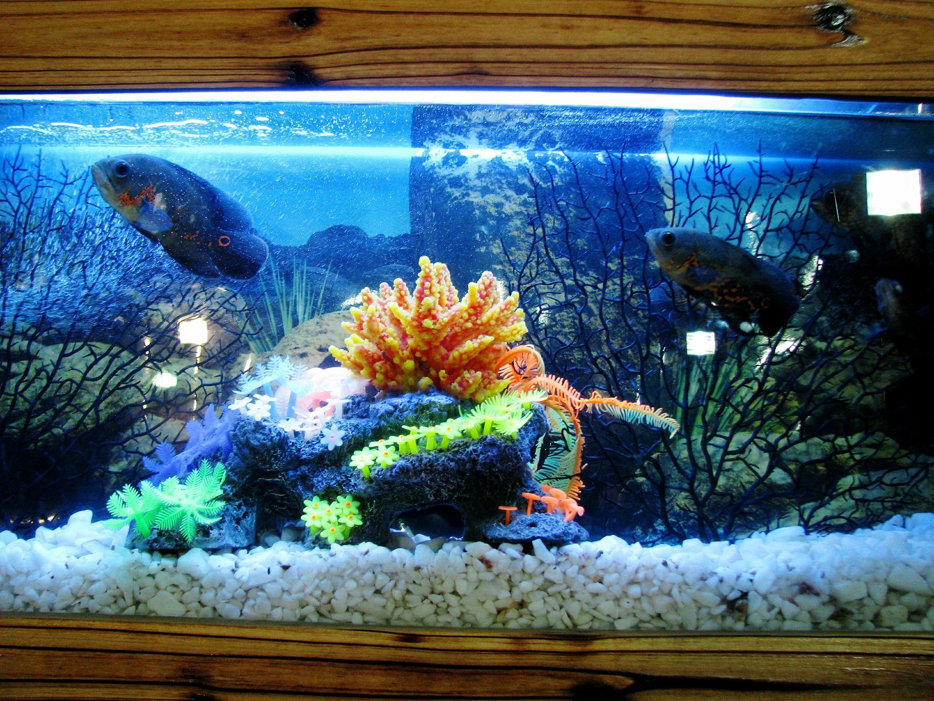 Sumps Or Refugiums The Love Aquarium