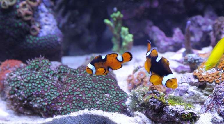 Sumps or Refugiums? – The Love Aquarium