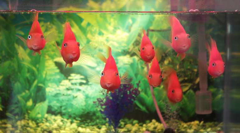 The first thing you should know about your aquarium: The Cycle